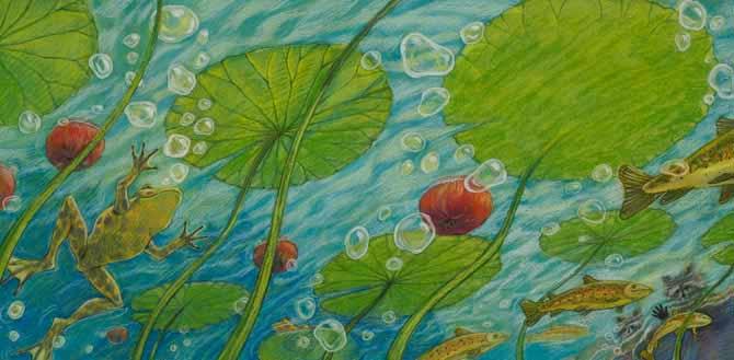 Frog Underwater